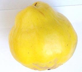 quince-ilmenskii