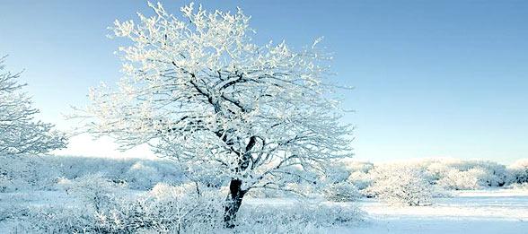 zimovka